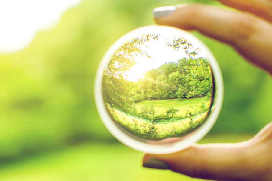 Hirers must beware 'looking-glass merit'